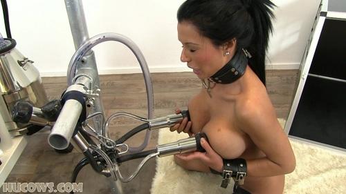Порно тёлка и аппарат